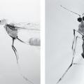 upart-casado-insectes-g
