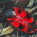 Blutwanze, 2017, Öl und Sprühfarbe auf MDF, 30 x 20 cm